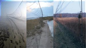 Redes de niebla para aves y murciélagos