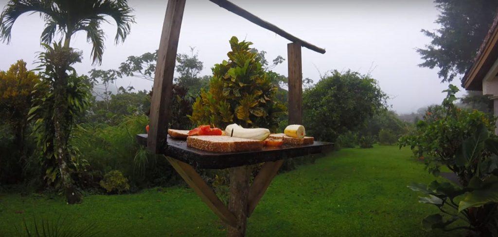 Alimentador para aves con fruta