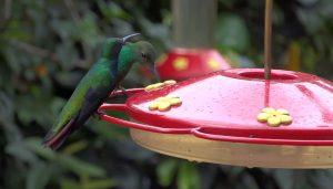 Alimentador de colibríes -Comederos para aves silvestres