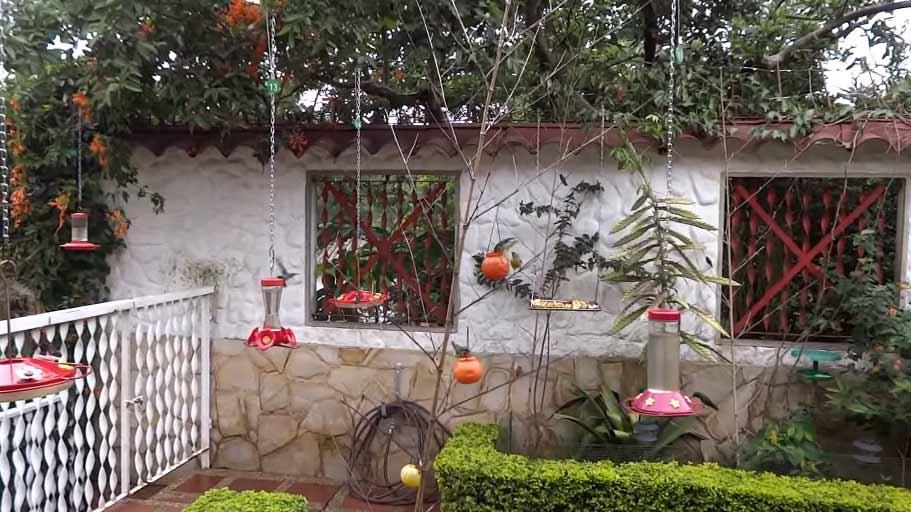 Alimentadores para aves - Comederos para aves silvestres