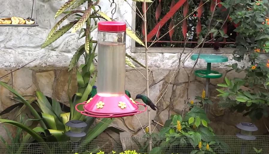 Alimentador para colibríes